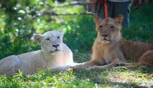 safariadventure
