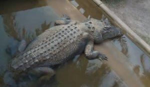 Crocodylus Park - Darwin