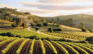 Bethany Wines – Tanunda