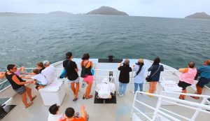 Moonshadow TQC Whale Watching and Dolphin Cruises - Port Stephens