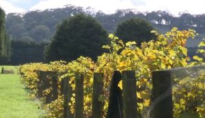 Mike's Wine Tours - Macedon Ranges