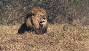Southern Africa & Victoria Falls with Evergreen Tours part 1