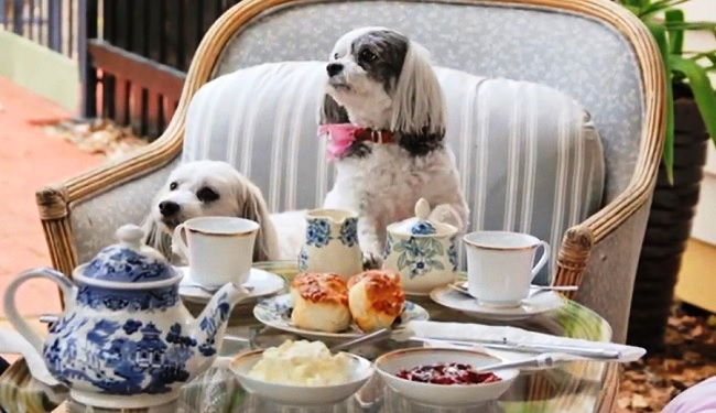 Must Love Dogs Bed & Breakfast - Rutherglen - Victoria - Promotion